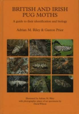 British and Irish Pug Moths - a Guide to their Identification and Biology (Hardback)