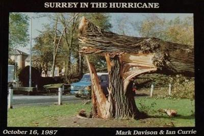 Surrey in the Hurricane: Great Storm of October 16th 1987 1987 - Great Storm of 1987 in Southern England (Paperback)