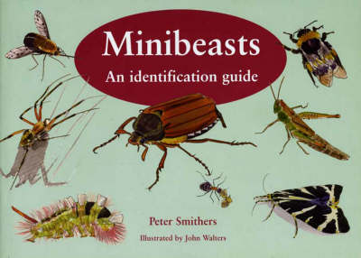 Minibeasts: An Identification Guide (Paperback)