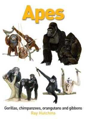 Apes: Gorillas, Chimpanzees, Orangutans and Gibbons (Hardback)