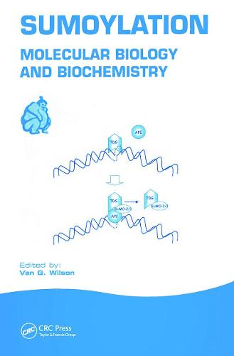 Sumoylation: Molecular Biology and Biochemistry (Hardback)