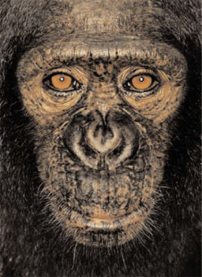 James and Other Apes (Hardback)