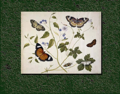 The Seymer Legacy: Henry Seymer and Henry Seymer Jnr of Dorset and Their Entomological Paintings, with a Catalogue of Butterflies and Plants (1755 - 1783) (Leather / fine binding)