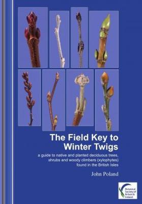 The Field Key to Winter Twigs: A Guide to Native and Planted Deciduous Trees, Shrubs and Woody Climbers (Xylophytes) Found in the British Isles (Paperback)