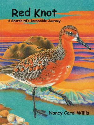Red Knot: A Shorebird's Incredible Journey (Paperback)