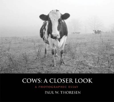 Cows: A Closer Look: A Photographic Essay (Hardback)