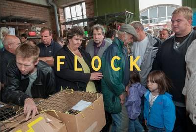 Flock (Hardback)