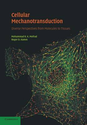Cellular Mechanotransduction: Diverse Perspectives from Molecules to Tissues (Paperback)