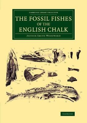 Cambridge Library Collection - Monographs of the Palaeontographical Society: The Fossil Fishes of the English Chalk (Paperback)