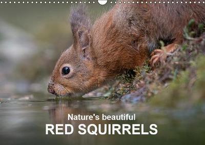 Nature's beautiful red squirrels 2019: Red squirrels in natural surroundings - Calvendo Animals (Calendar)