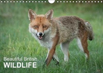 Beautiful British WILDLIFE 2019: Photographs of different british wildlife - Calvendo Animals (Calendar)