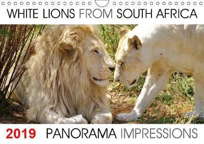 """White Lions from South Africa Panorama Impressions 2019: The calendar """"White Lions from South Africa Panorama Impressions""""created by Barbara Fraatz, a photographer in South Africa (www.thula-photography.com ) is showing 12 fantastic white lion portraits from South Africa. - Calvendo Animals (Calendar)"""