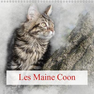 Les Maine Coon 2019: Le chat Maine Coon est le chat le plus imposant qui soit - Calvendo Animaux (Calendar)