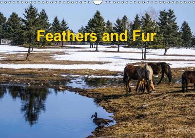 Feathers and Fur 2019: Canadian birds and animals - Calvendo Places (Calendar)