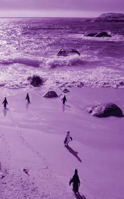 Alive! Little Penguin Friends - Violet Duotone - Photo Art Notebooks (5 X 8 Series) (Paperback)