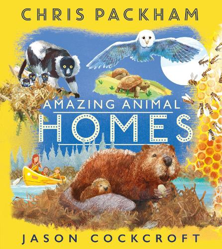 Amazing Animal Homes (Paperback)