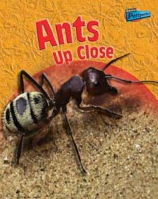 Minibeasts Up Close: Pack A of 5 - Raintree Perspectives: Minibeasts Up Close (Paperback)