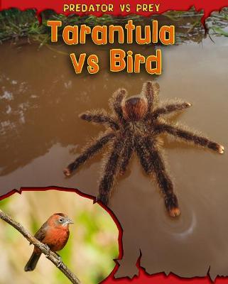 Tarantula vs Bird - Read Me!: Predator vs Prey (Hardback)