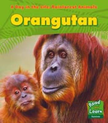 Rainforest Animals: Orangutan - Read and Learn: A Day in the Life: Rainforest Animals (Paperback)