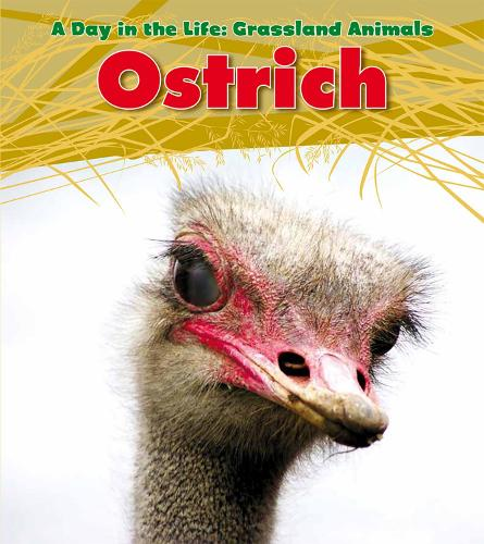 Ostrich - Read and Learn: A Day in the Life: Grassland Animals (Paperback)