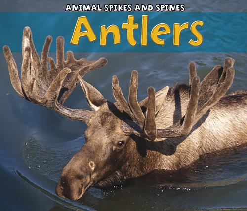 Antlers - Acorn: Animal Spikes and Spines (Paperback)