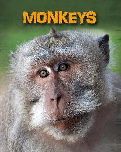 Monkeys - InfoSearch: Living in the Wild: Primates (Paperback)