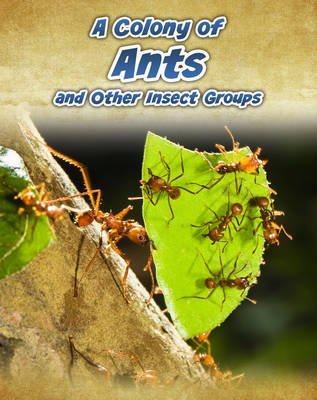 A Colony of Ants: and Other Insect Groups - InfoSearch: Animals in Groups (Hardback)