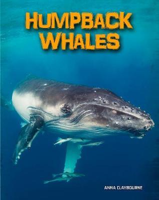 Humpback Whales - InfoSearch: Living in the Wild: Sea Mammals (Hardback)