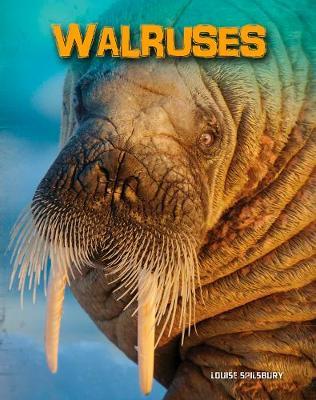 Walruses - Living in the Wild: Sea Mammals (Hardback)