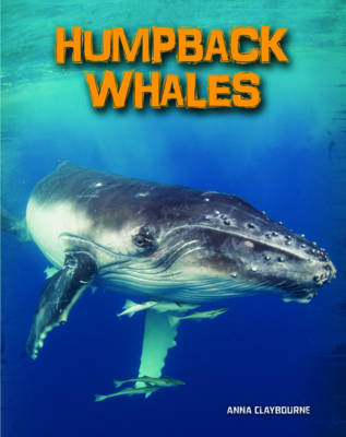 Humpback Whales - InfoSearch: Living in the Wild: Sea Mammals (Paperback)