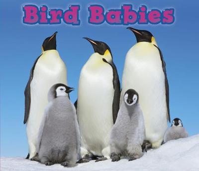 Bird Babies - Acorn: Animal Babies (Hardback)