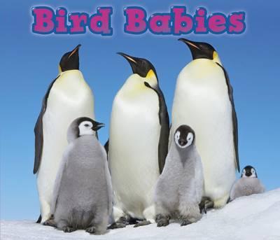 Bird Babies - Acorn: Animal Babies (Paperback)