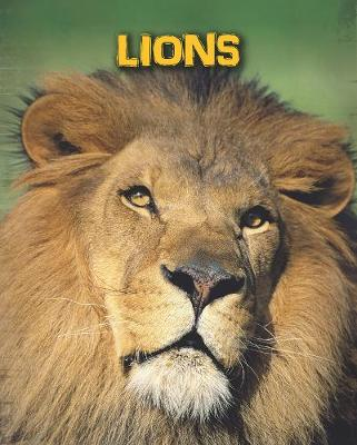Lions - InfoSearch: Living in the Wild: Big Cats (Hardback)