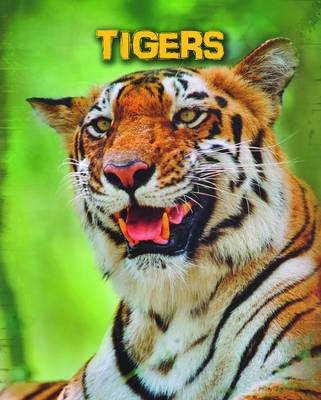 Tigers - Infosearch: Living in the Wild: Big Cats (Paperback)
