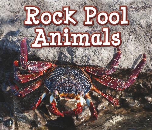 Rock Pool Animals - Acorn: Animals in Their Habitats (Hardback)