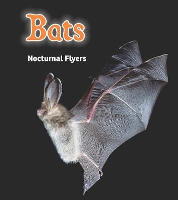 Bats: Nocturnal Flyers - Read and Learn: Night Safari (Hardback)