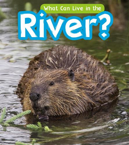 What Can Live in a River? - Read and Learn: What Can Live There? (Hardback)