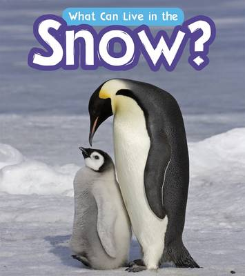 What Can Live in the Snow? - Read and Learn: What Can Live There? (Paperback)