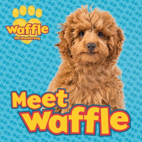 Meet Waffle! - Waffle the Wonder Dog (Paperback)