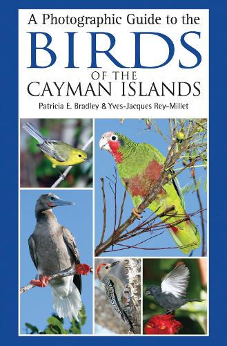 A Photographic Guide to the Birds of the Cayman Islands (Paperback)