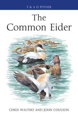 The Common Eider - Poyser Monographs (Hardback)