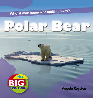 Polar Bear - Big Picture (Paperback)