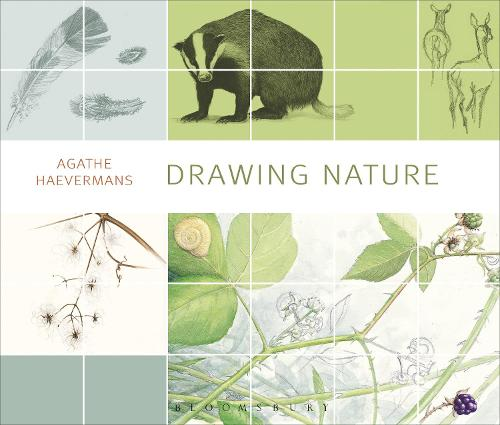 Drawing Nature (Paperback)