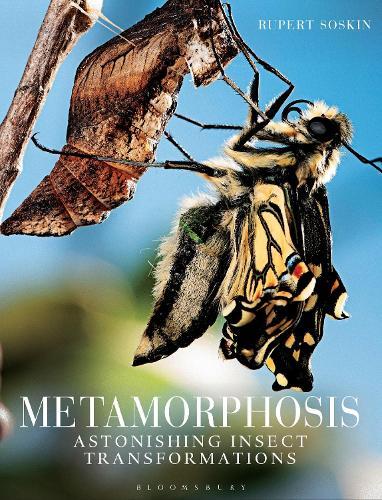 Metamorphosis: Astonishing insect transformations (Hardback)