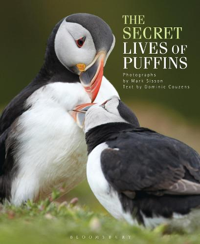 The Secret Lives of Puffins (Hardback)