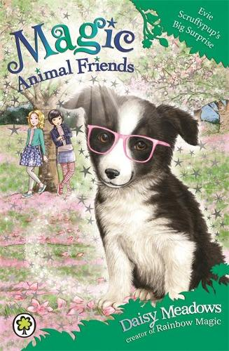 Magic Animal Friends: Evie Scruffypup's Big Surprise: Book 10 - Magic Animal Friends (Paperback)