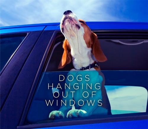 Dogs Hanging Out Of Windows (Hardback)