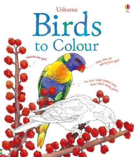 Birds to Colour - Nature Colouring Books (Paperback)