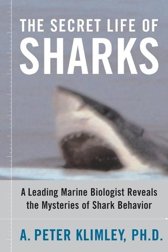 The Secret Life of Sharks: A Leading Marine Biologist Reveals the Mysteries of Shark Behavior (Paperback)