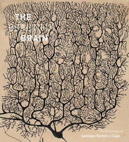 The Beautiful Brain: The Drawings of Santiago Ramon y Cajal (Hardback)